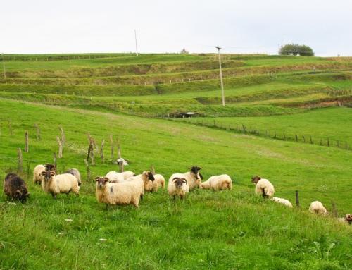 Pasear por los alrededores de la casa rural